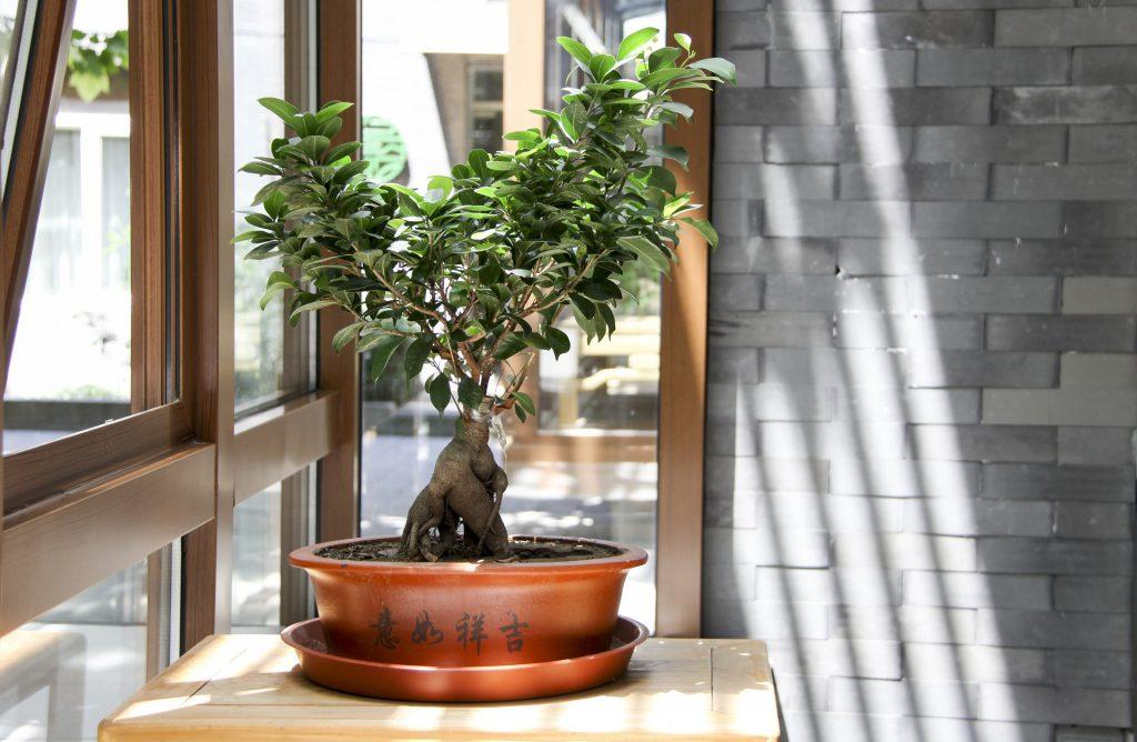 drzewo dom