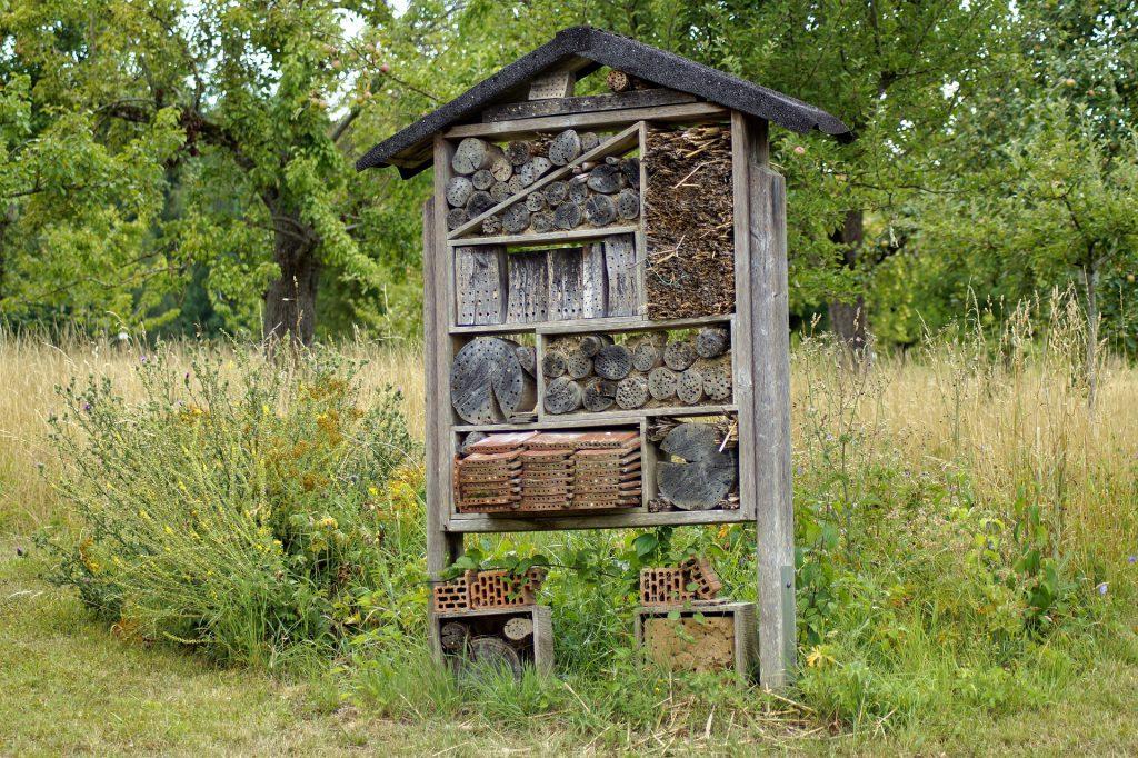 dom dla owadów